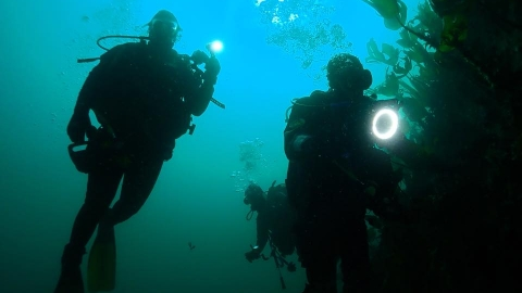 Seasearch divers